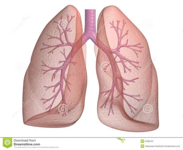 fisioterapia respiratoria elche a domicilio